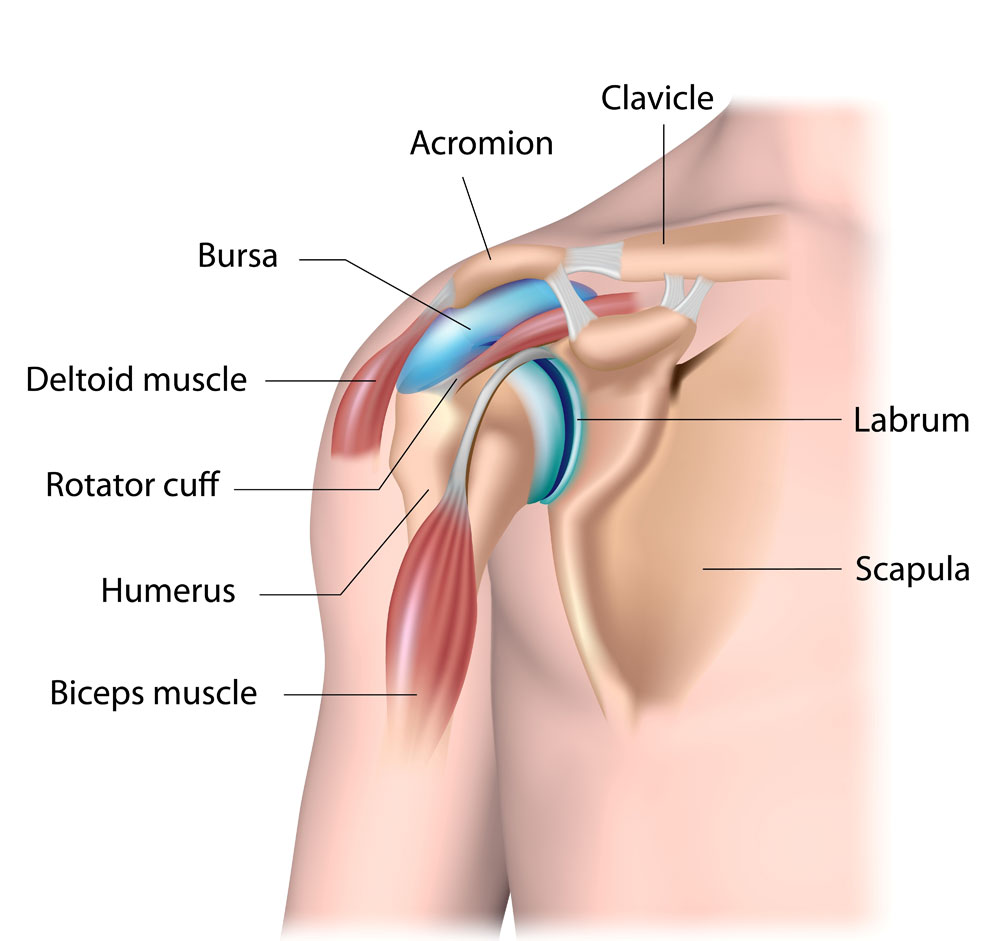 Shoulder Anatomy | Shoulder Injury | Van Nuys, Thousand Oaks, Los ...